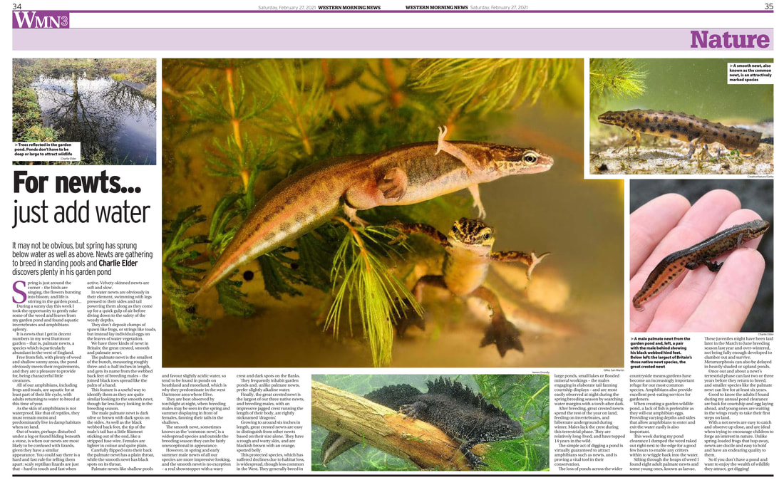 nature feature newts