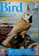 Birdwatching everyday guide