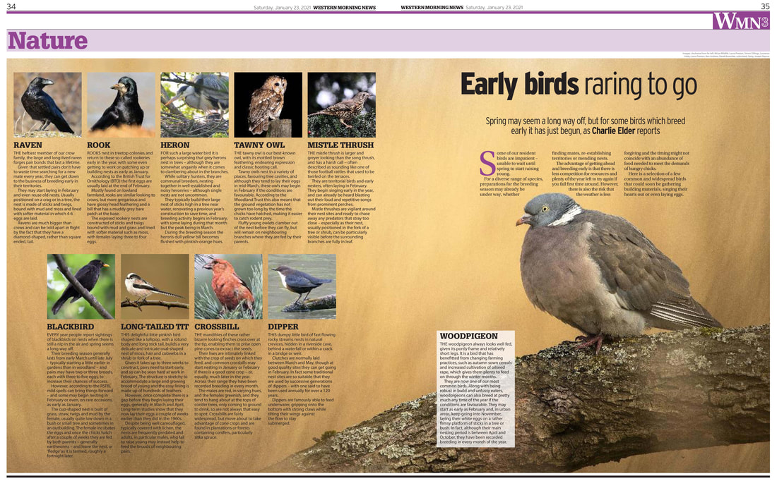 nature feature early birds